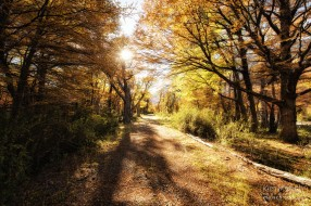 Enchanted Road - El Chalten, Patagonia, Argentina